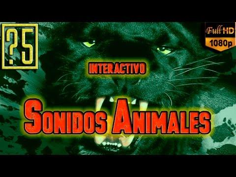 Sonidos de Animales [Reto Interactivo] ¿Eres capaz de identificar que animales los hacen?