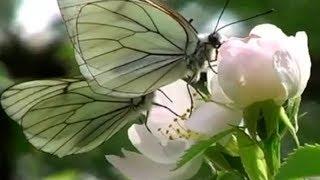 Весна Ф Лист Утешение Ferenc Liszt
