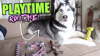 Daily Playtime Routine For Siberian Huskies!