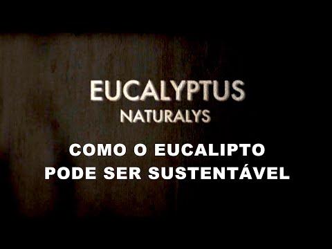 Eucalyptus Naturalis