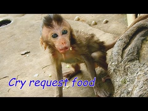 BREAK HEART See Poor Baby Charlee Cry Request Food Like This | Skinny Charlee Leave Mom Find Food