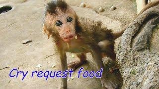 BREAK HEART see poor baby Charlee cry request food like this   Skinny Charlee leave mom find food