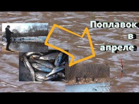 Рыбалка на ПОПЛАВОК В АПРЕЛЕ. Сезон 2019 разловили. Поклёвки - Болен Рыбалкой №658