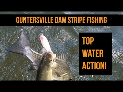 Stripe Fishing Guntersville Dam -- Top Water