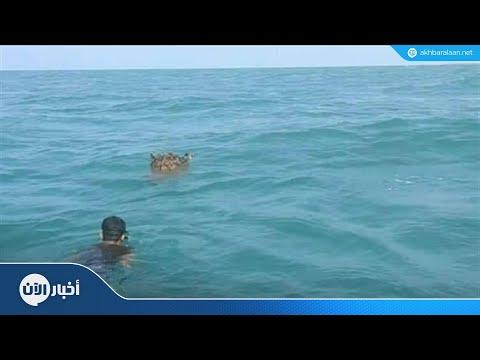 العثور على ألغام بحرية زرعها الحوثيون في البحر الأحمر  - نشر قبل 2 ساعة