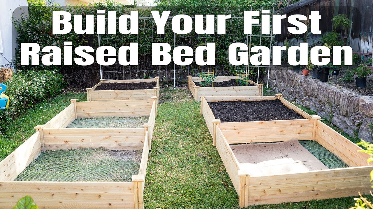 Raised vegetable gardens -