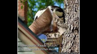 Котоматрица в видеофомате. Август 2014