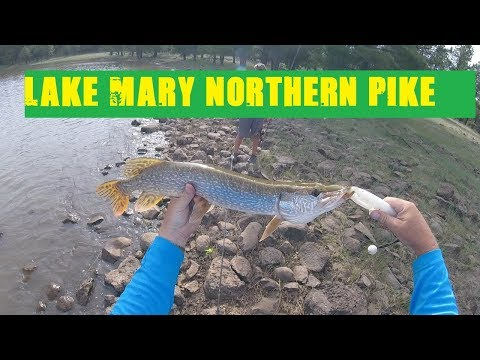 Great Fishing For Northern Pike At Lake Mary Arizona