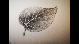 How to draw and shade a leaf 🌿