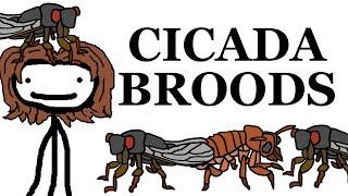 Cicada Broods