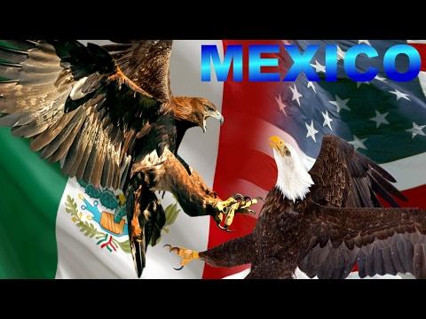 Símbolo y Emblema de México: La Majestuosa Águila Dorada - Águila Real