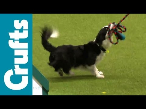 Agility - Small Circular Knockout - Crufts 2012