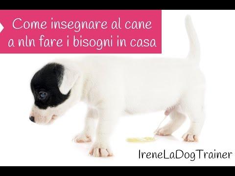 Urina dei cani come eliminare l 39 odore doovi - Eliminare odore pipi cane giardino ...