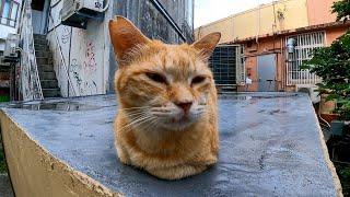 頭を撫でると時々ペロペロする野良猫がカワイイ