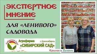 Сибирский Сад. Сорта томатов, перца и баклажанов самые простые в выращивании
