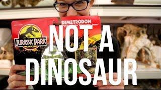 Dimetrodon is Not A Dinosaur
