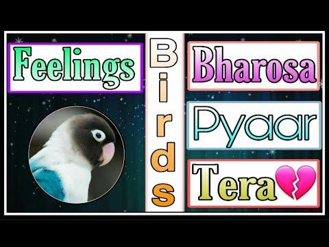 Bharosa Pyaar Tera   Ost Lyrics Video Hd   Full Song 2019 English Subtitles   BY Zumar Creation