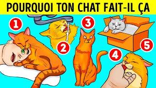 Voilà Pourquoi Ton Chat Aime Les Éviers Et Les Boîtes