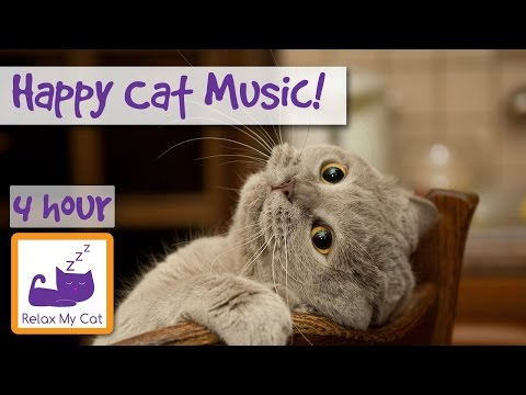 Compilation of Cat Music! Music for Stress, Anxiety, Sleep and to Soothe! Make Your Cat Happy Today!