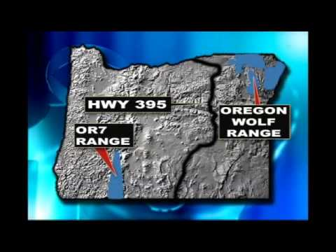 Growing Wolf Population Worries Ranchers