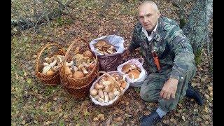 Медведеву нашли работу для всех пенсионеров