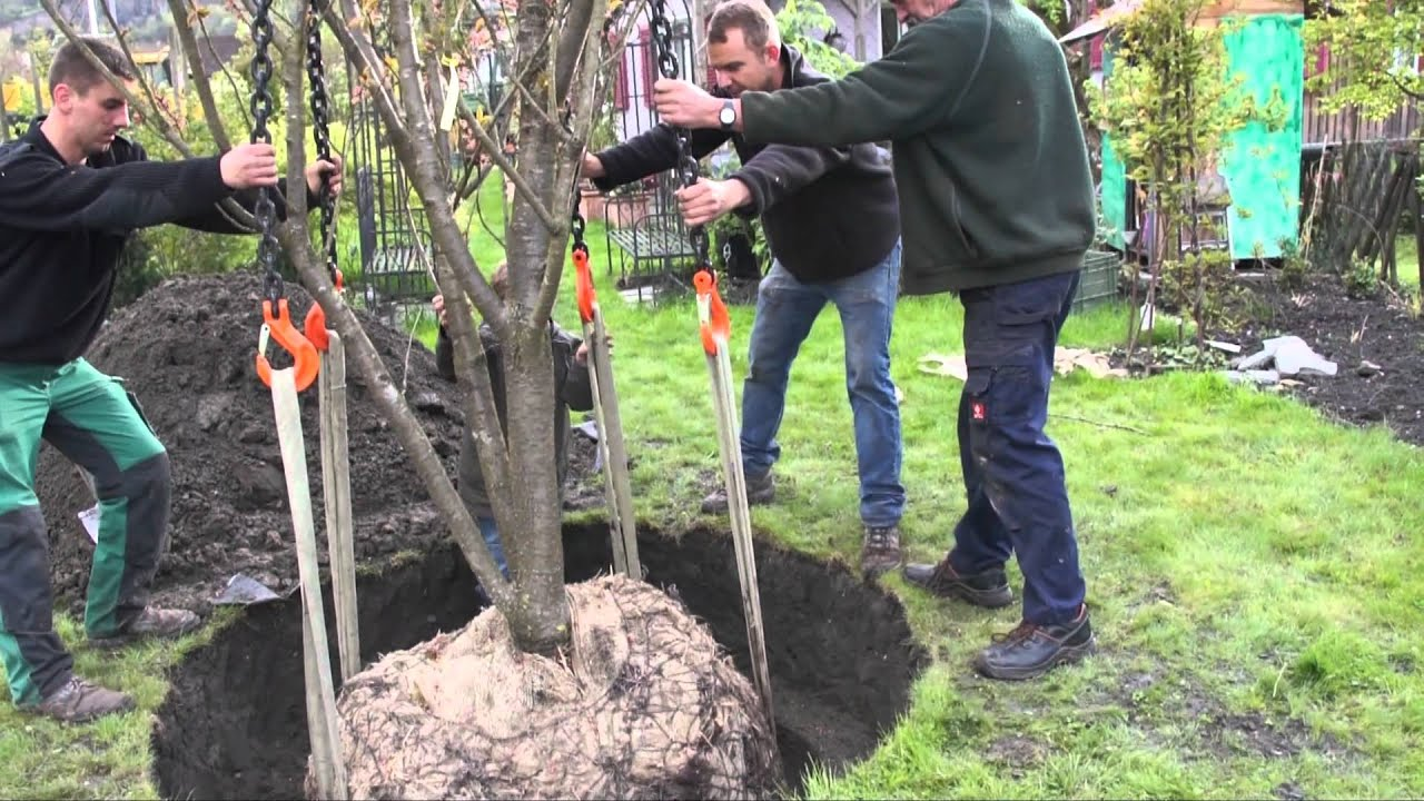 Wie Pflanze Ich Einen Grossbaum Teil 5v10