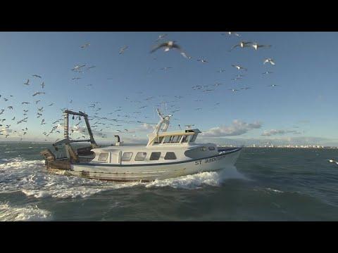 فرانس 24:Fishing in France's Grau du Roi harbour, a family tradition