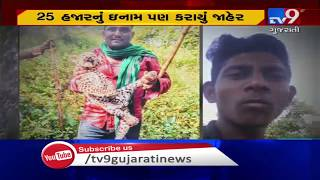 Case of miscreants torturing leopard cub; Forest dept announced cash reward for info | Junagadh