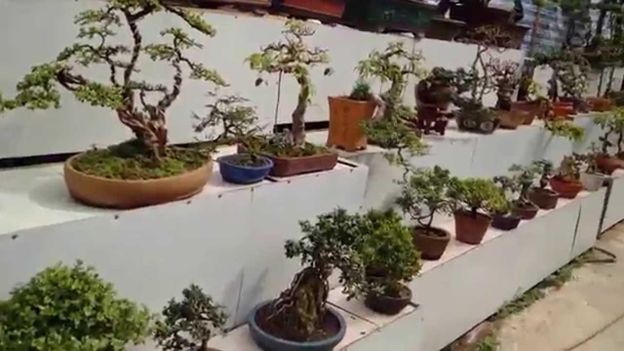 Vườn Bonsai Mini đẹp