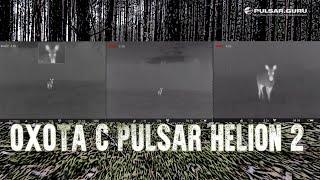 Охота на лося на гону. Видео попаданий записаны на Pulsar Helion.