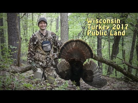 Turkey Hunting Public Land Wisconsin 2017