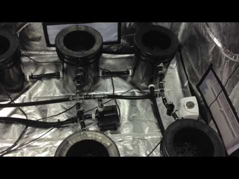 RDWC hydroponic system
