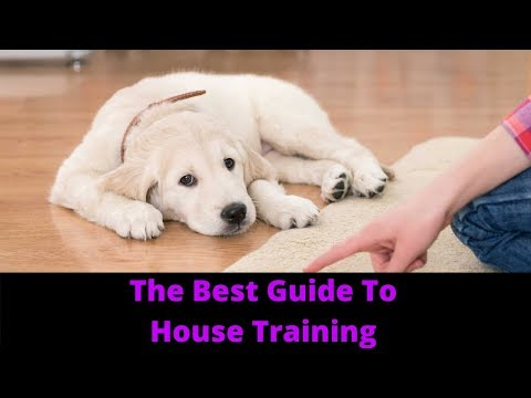 How To House Train A Puppy And Potty Train Your Dog