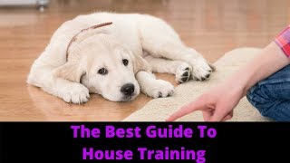 How To House Train Or Potty Train A Dog Or Puppy