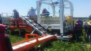 Automated Ag Watermelon harvester