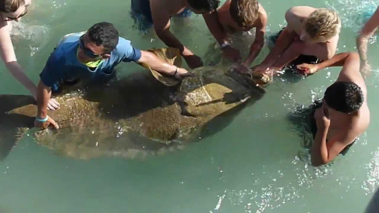 Large grouper caught at naples pier youtube for Grouper fishing florida