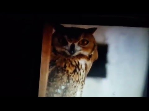 Eagle Owl Film at Dubai Museum 17.01.2016