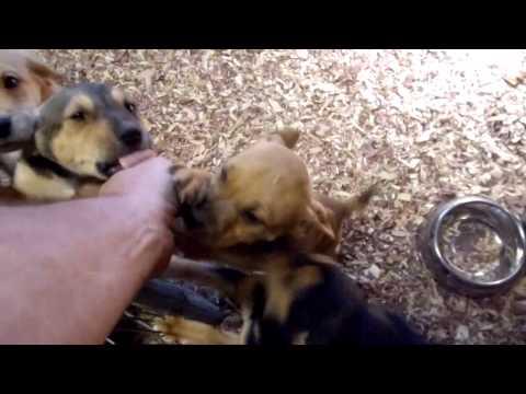 Canton Ohio pups
