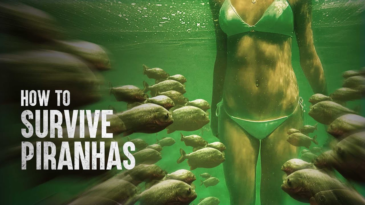 Download How to Survive a Piranha Feeding Frenzy
