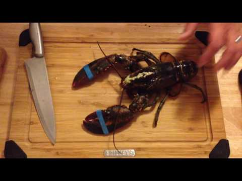 How to kill a lobster properly, and humanely thumbnail