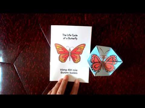 Học liệu Vòng đời phát triển của Bươm bướm (Life cycle of a Butterfly) - Thiên Tài Nhí