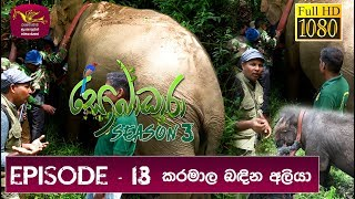 Sobadhara - Sri Lanka Wildlife Documentary | 2019-07-19 | Elephant with Tracking Belt