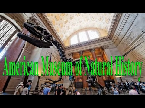 Visiting American Museum of Natural History in New York, United States - The Best Museum in USA