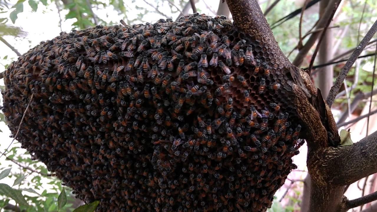 Wild Bee Hive – wildalongtheway  Natural Beehives