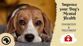 Simple Ways To Help Your Dog's Mental Health | DOG HEALTH 🐶 Brooklyn's Corner