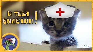 Видео - лекарство. Просто самые милые котята