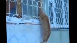 Смешное видео про кошек - Супер видео приколы! Забавные кошки (выпуск 5)