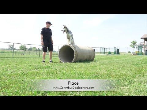 Dog Training: 1 Year Old Siberian Husky, Nanuk! Before/After 2 Week Board and Train!