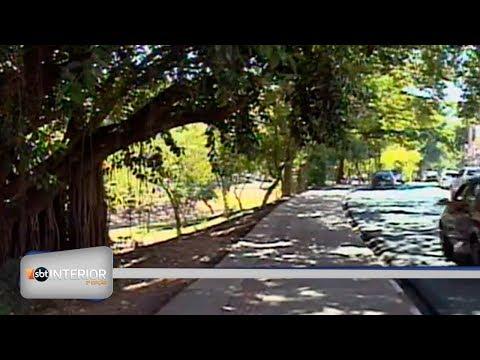 Prefeitura de Prudente decreta proteção a 3 árvores da área urbana da cidade