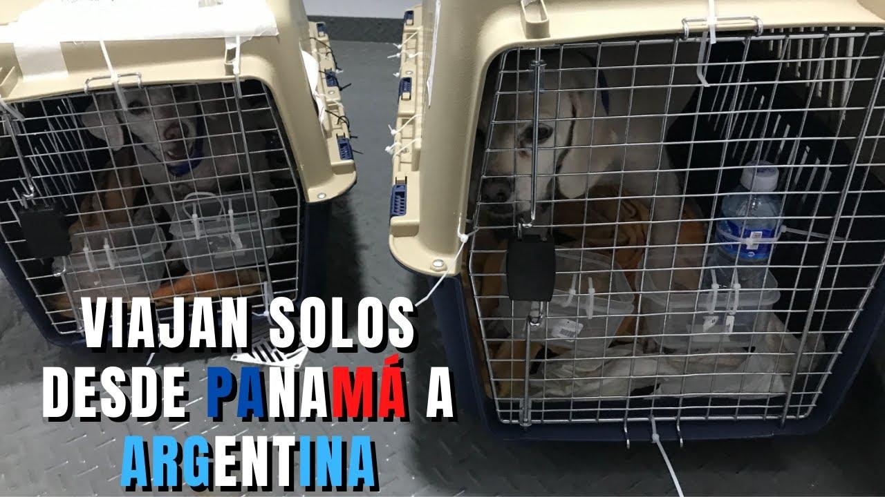 ¡Después de 2 años! Nuestras mascotas viajan de Panama a Argentina SOLOS